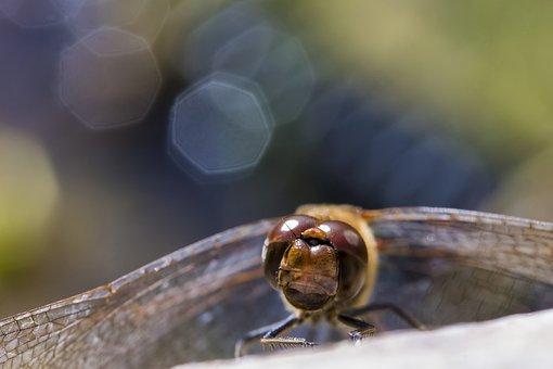 Dragonfly, Nature, Vízközel, Mood