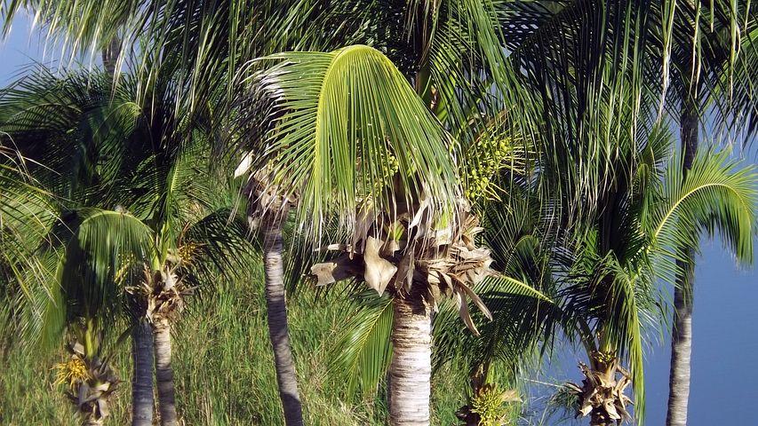 Palms, Palmas, Tourism, Beach, Pool, Hotel, View, Sand