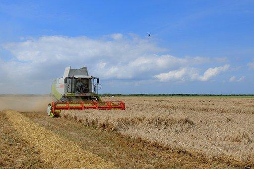 Agriculture, Harvest, Wheat, Plain, Fields, Field