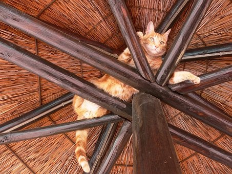 Cat, Rafters, Play, Relax, Ginger, Pet, Domestic