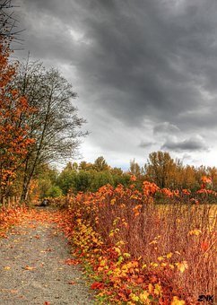 Horse, Trail, Trees, Autumn, Sky, Clouds, Outdoors