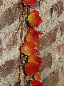Wine Partner, Vine Leaves, Wall, Brick, Grapevine