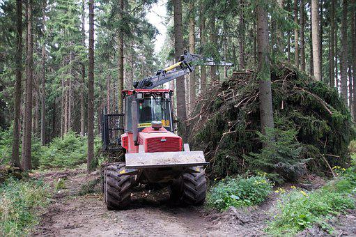 Forest, Machine, Logging, Bark, Branches, Nature