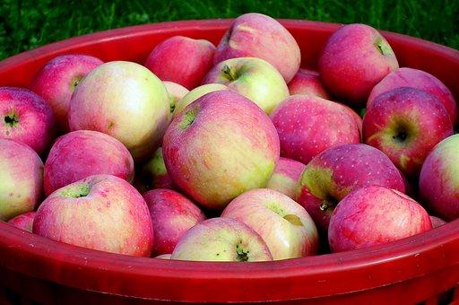 Apples, Fruits, Basket, Apple Basket, Basket Of Apples