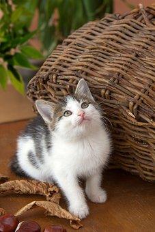 Cat, Kitten, Pet, Tabby Cat, Kitty, Young Cat, Animal