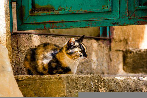 Cat, Animal, Stray Cat, Street Cat