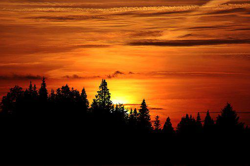 Sunset, Trees, Silhouette, Forest, Conifers, Coniferous