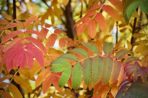 Leaves, Plant, Autumn, Fall, Greenery