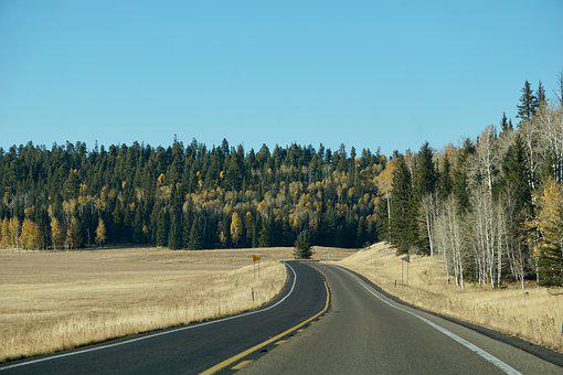 Road, Highway, Trees, Conifers, Coniferous, Forest