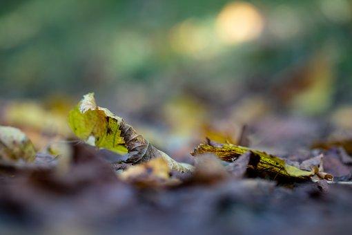 Leaves, Dry Leaves, Fall, Autumn, Nature, Closeup