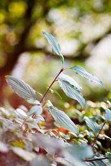 Leaves, Plant, Nature, Bush, Greenery, Foliage, Flora