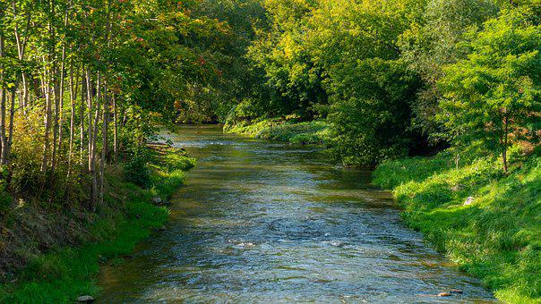 River, Trees, Forest, Greenery, Lush, Stream, Brook