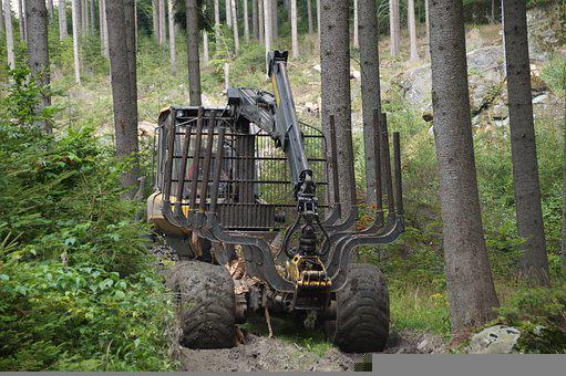 Forest, Trees, Machinery, Machine, Logging, Bark