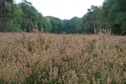 Meadow, Fields, Wildflowers, Flower Meadow, Prairie