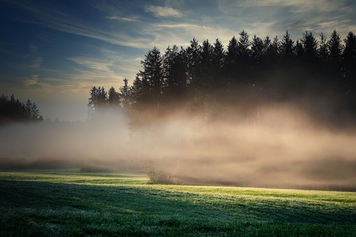Fog, Meadow, Trees, Fields, Prairie, Haze, Mist, Forest