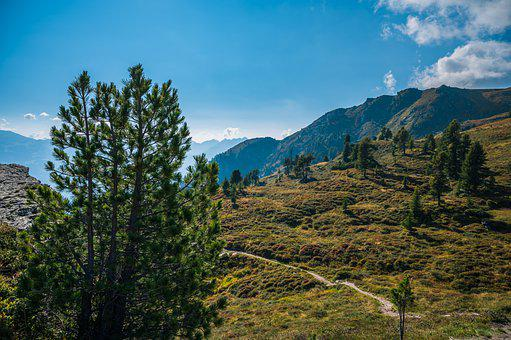 Mountains, Forest, Trees, Vegetation, Trail, Pathway