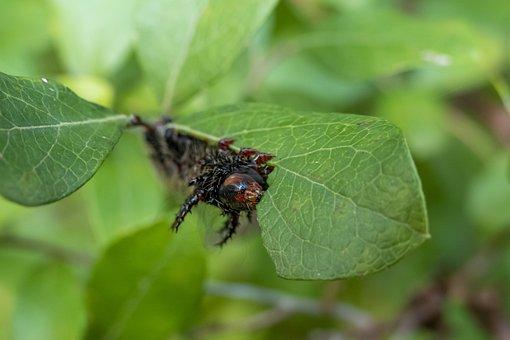 Plant, Leaves, Caterpillar, Insect, Larva, Animal