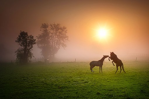 Horses, Playing, Fog, Ranch, Equines, Paddock, Mare