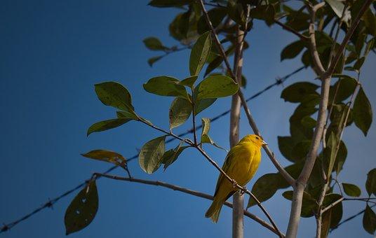 Bird, Tree, Perched, Branch, Yellow Bird