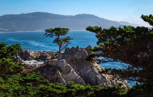 Ocean, Cliff, Trees, Vegetation, Waves, Sand, Coast