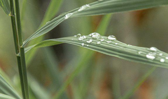 Leaves, Foliage, Plants, Raindrop, Water, Drop Of Water