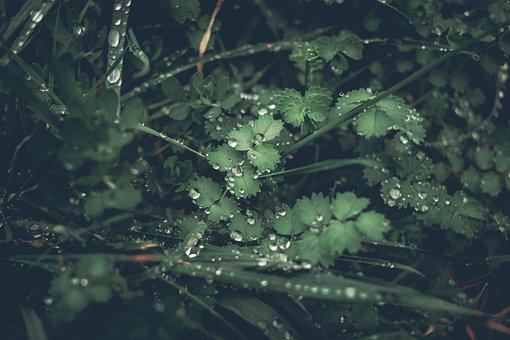 Leaves, Foliage, Droplets, Water Droplets, Wet Leaves