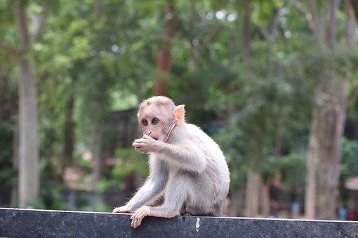 Monkey, Animal, Zoo, Baby Monkey, Young Monkey, Primate