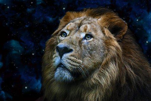 Lion, Predator, Animal, Mammal, Big Cat, Wild Animal