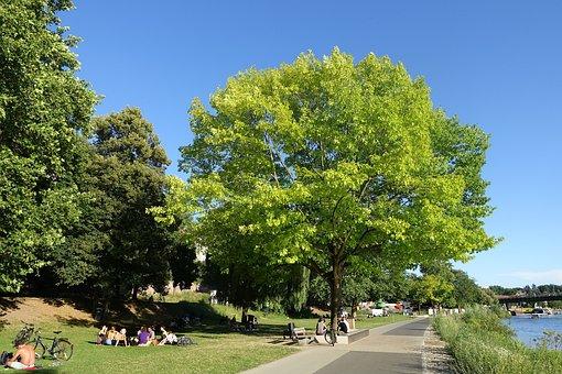 Picnic, Park, Walkway, Promenade, Trees, Foliage