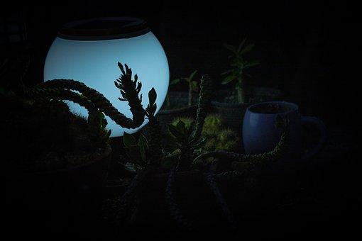 Lamp, Moon Lamp, Plants, Night Lamp, Indoor Plants