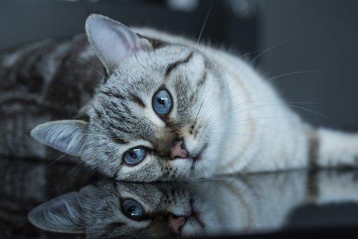 Cat, Feline, Kitten, Portrait, Cat Portrait, Look