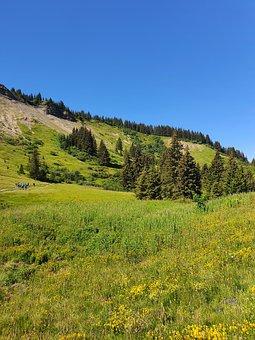 Fields, Meadow, Prairie, Mountain, Mountain Landscape