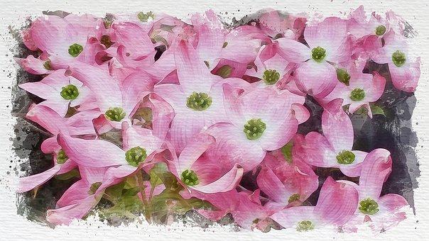 Dogwood, Flowers, Painting, Pink Flowers, Flower, Bloom