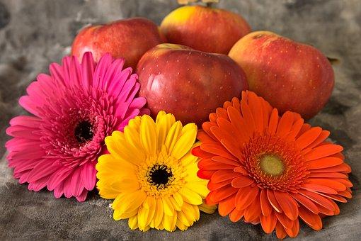 Apples, Flowers, Still Life, Daisies, Gerbera, Blossom