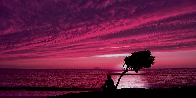 Man, Tree, Silhouette, Sunset, Dusk, Ocean, Sea