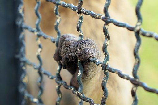 Monkey, Hand, Fence, Animal, Mammal, Wildlife, Cage