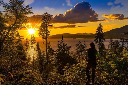 Sea, Trees, Sunset, Sun, Sunrays, Woods, Foliage, Ocean