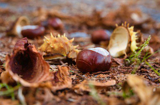 Autumn, Chestnuts, Shells, Leaves, Opened, Fall Foliage
