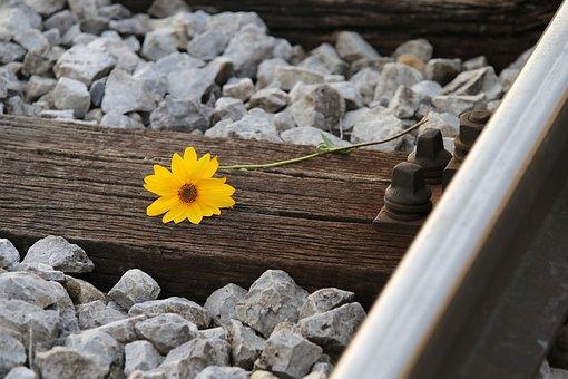 Rail Track, Flower, Arnica Flower, Yellow Flower, Bloom