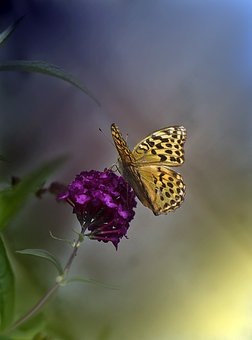 Butterfly, Flower, Pollination, Insect