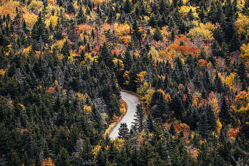 Road, Trees, Forest, Fall, Nature, Drive, Leaves