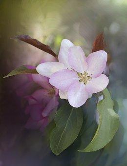 Flower, Rose, Leaves, Foliage, Wild, Nature
