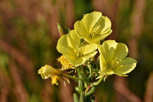 Garden, Flowers, Plant, Yellow Flowers