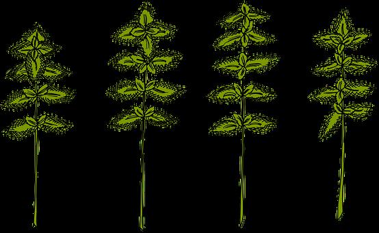 Herbs, Basil, Herb, Health, Healthy, Garden, Plant