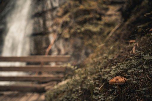 Mushroom, Fungi, Fungus, Ground, Grass, Plants, Autumn