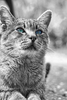 Cat, Kitten, Gray, Pet, Cute, Animal, Cat's Eyes