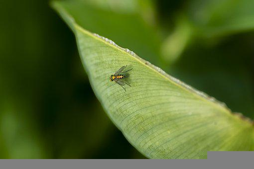 Fly, Insect, Leaf, Veins, Animal World, Bug, Tiny
