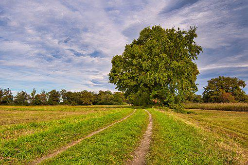 Nature, Field, Trail, Path, Way, Pasture, Meadow