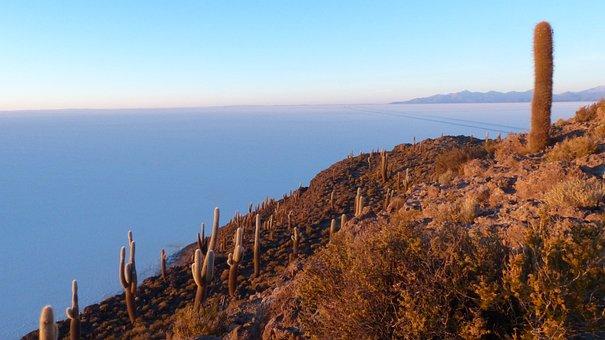 Cacti, Mountain, Nature, Highland, Mountainside, Plants