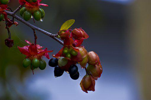 Spring, Flowers, Hanging Fruits, Rain Droplets, Nature